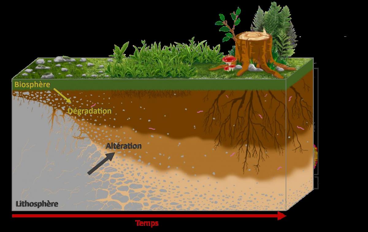 Les différents types de sols en France — Wiki Triple Performance